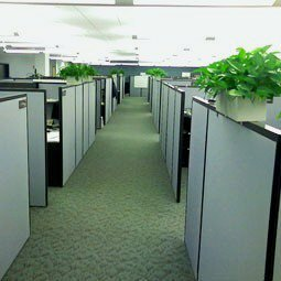 Think Outside the Cube: Why the Office Isn't the Best Workspace